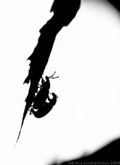 2010-02-26_145309