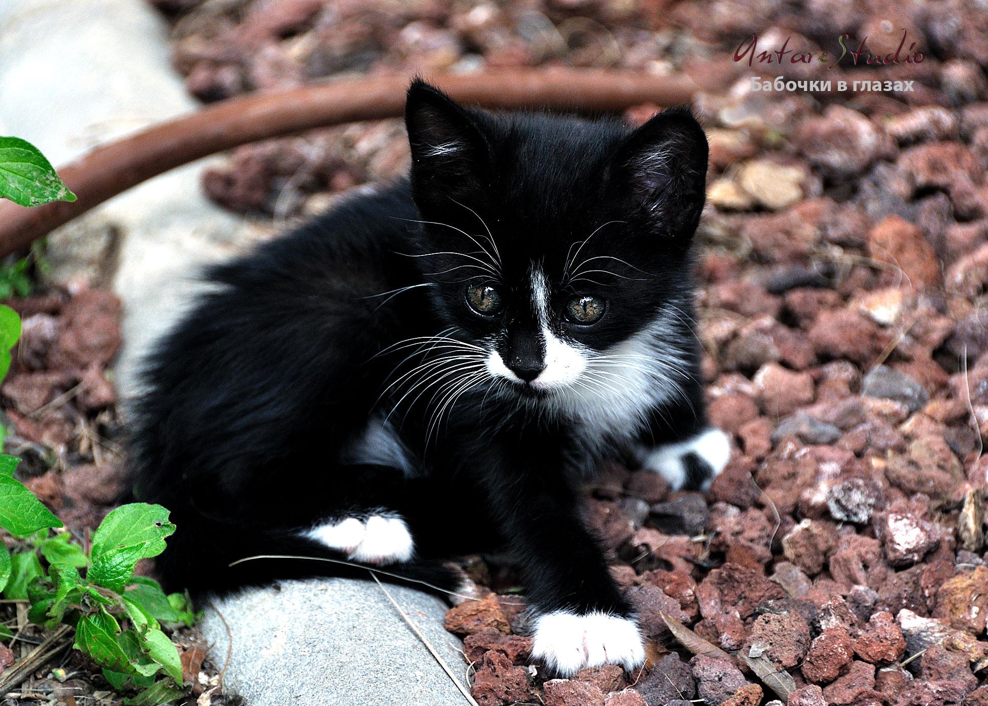 черно белый котенок фото сегодня