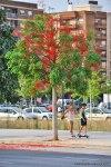 Лето-в-Валенсии-36